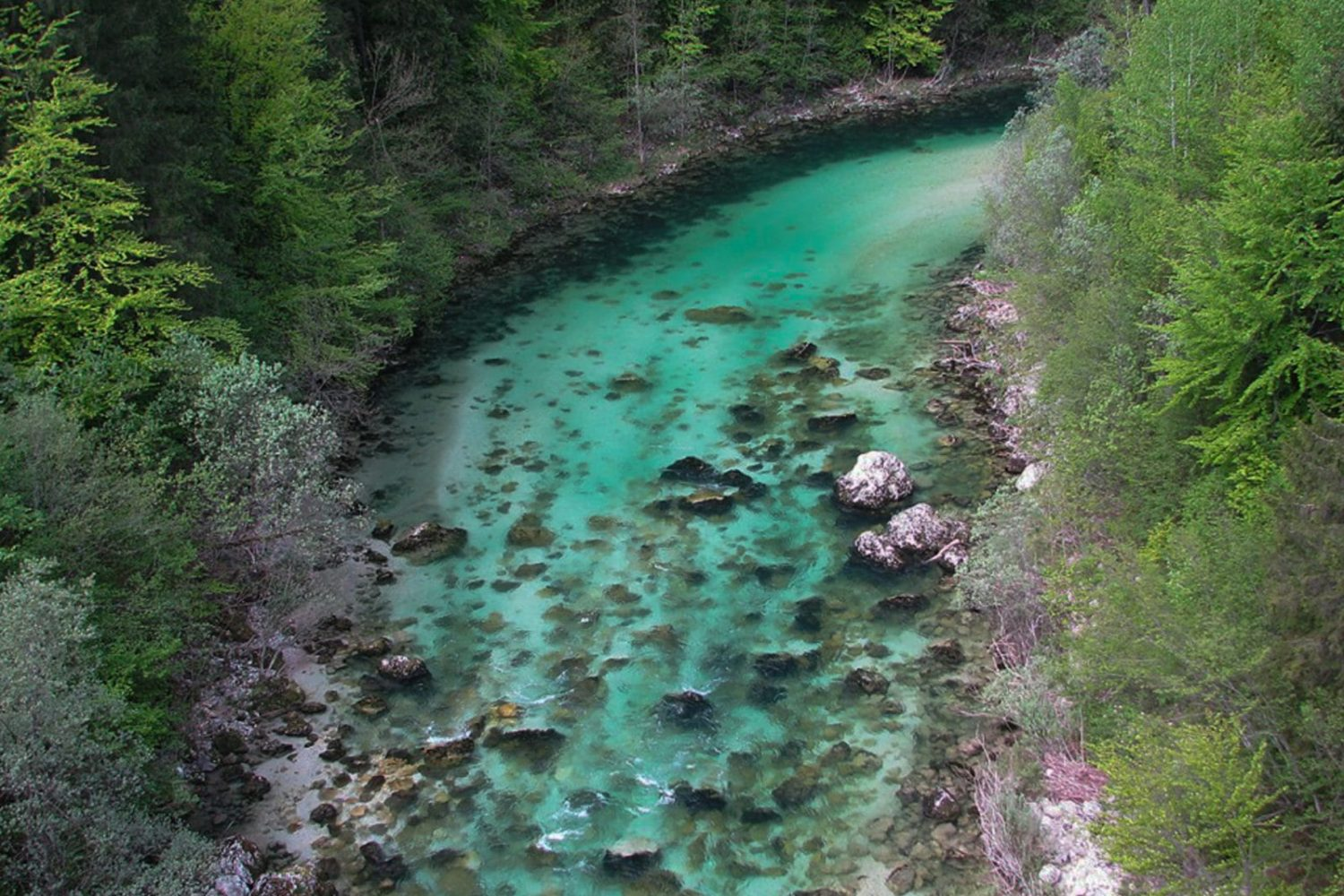 Fly fishing in Soča